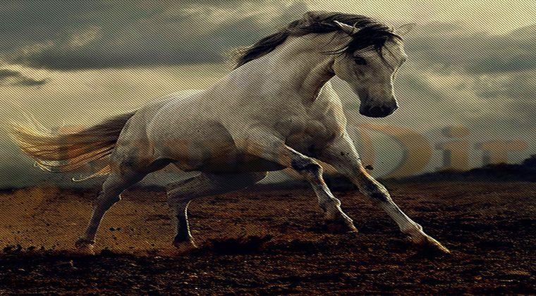 Güzel At