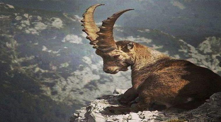 Kürdistan Hayvanları